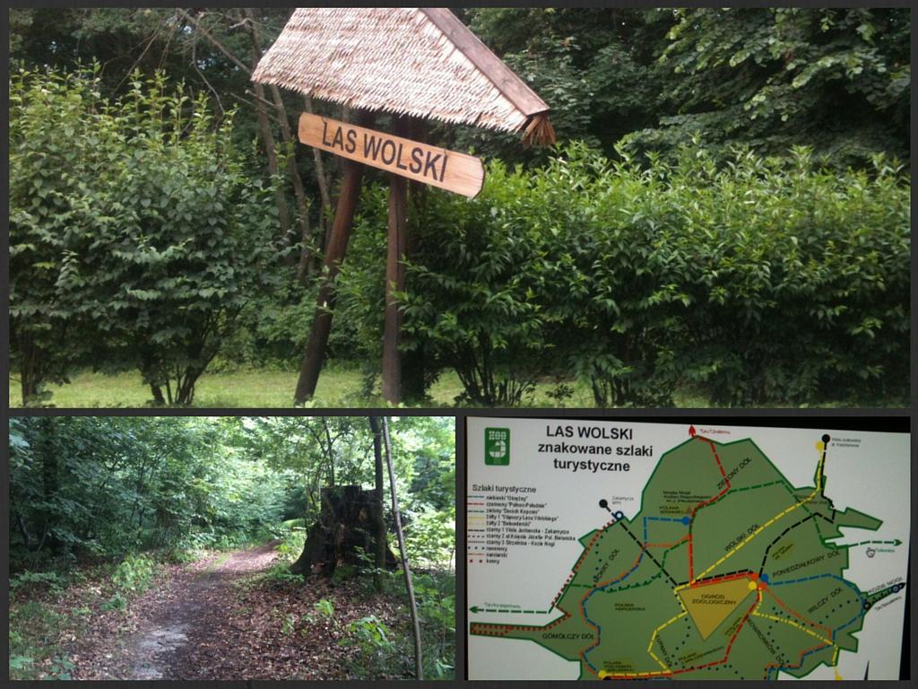 Las Wolski w Krakowie